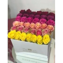 Dégradé de roses